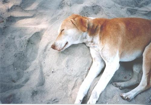 le chien du bout du monde 1996