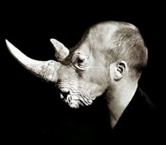 RhinocérosRh-2020-04-08-à-22.18.44.png