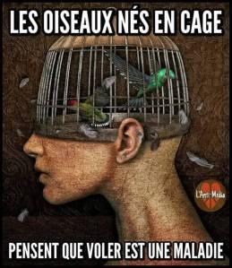 les oiseaux nés en cage.jpg